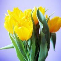 Жёлтый букет невесты – лучик солнца на Вашей свадьбе
