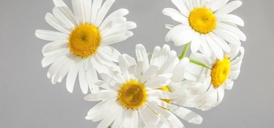Белый букет невесты – выбираем цветы и составляем стильный букет