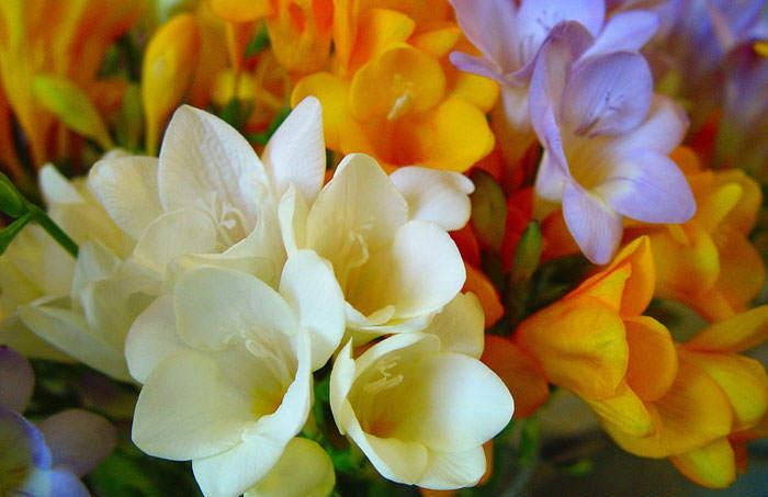 Желтые цветки