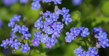 Синие цветы для букета невесты