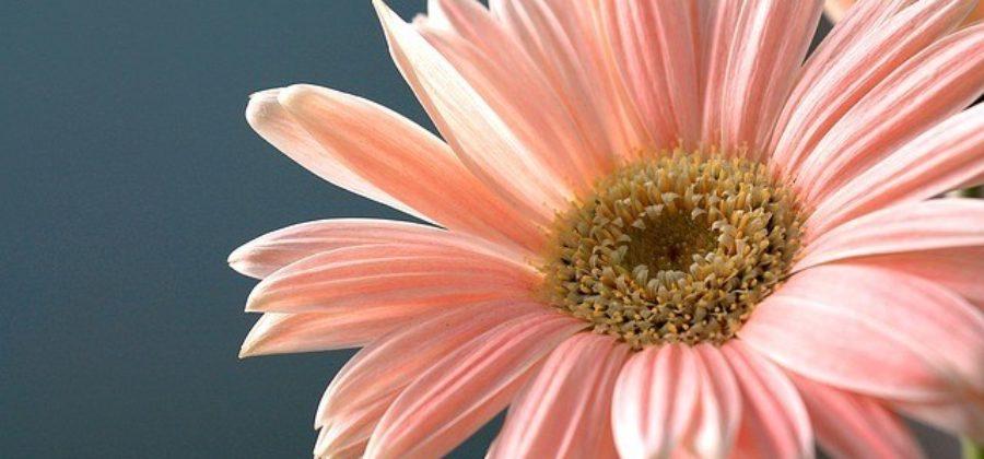 Свадебный букет из гербер – выбор флористов