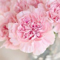 Розовый букет невесты: выбираем цветы для композиции