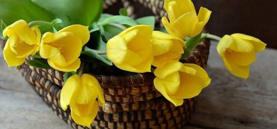 Свадебный букет из тюльпанов – самые оригинальные варианты