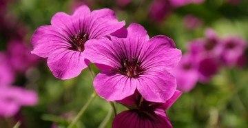 Фиолетовый цветок для букета